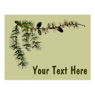 Larch Branch Postcard