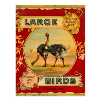 Large Birds Postcard