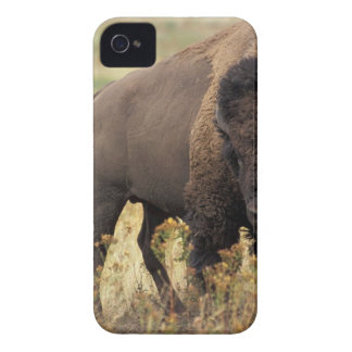 Large Bison iPhone 4 Case-Mate Cases