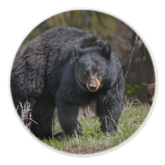 LARGE BLACK BEAR ON A CERAMIC KNOB