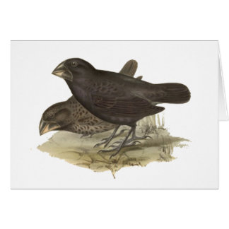 Large Ground Finch Card
