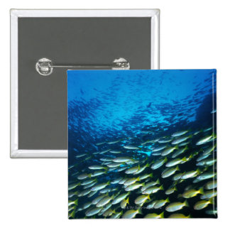 Large group of Bigeye Snapper fish swimming 15 Cm Square Badge