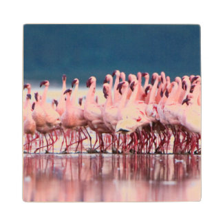 Large Group Of Lesser Flamingos Maple Wood Coaster
