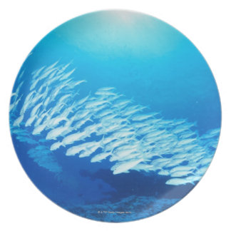 Large group of Yellowfin Goatfish swimming Plate