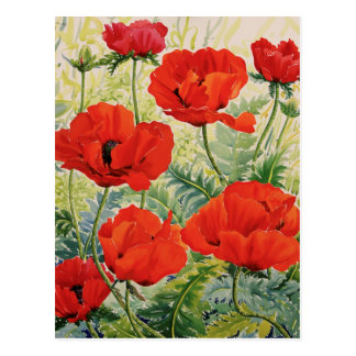 Large Red Poppies Postcard