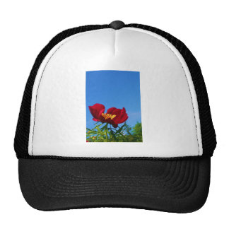 Large Red Poppy Photo Hats