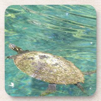 large river turtle swimming coaster