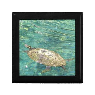 large river turtle swimming gift box