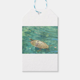 large river turtle swimming gift tags