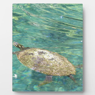 large river turtle swimming plaque