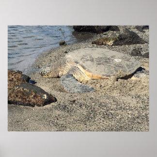 Large Sea Turtle Poster
