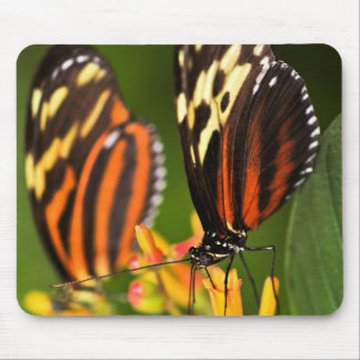 Large tiger butterflies mouse pad
