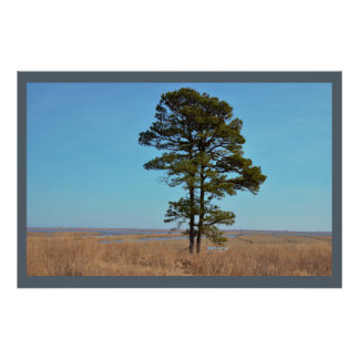 Large Tree Photo Poster