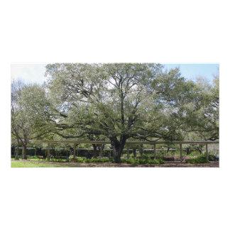 Large Tree PhotoCard Customized Photo Card