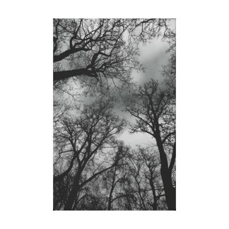 Large trees canvas print