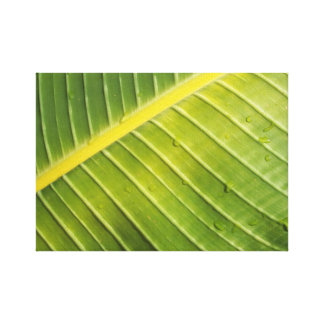 Large Tropical Leaf with Water Droplets by Rayada Canvas Print