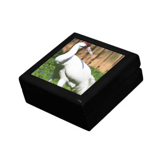 Large Whooping Crane Small Square Gift Box