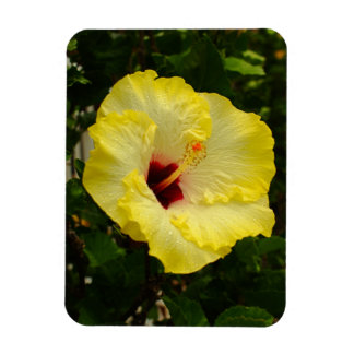 Large Yellow Hibiscus Flower Rectangular Photo Magnet