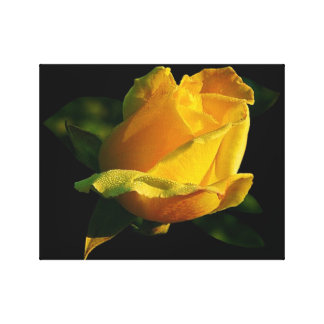 Large Yellow Rose Canvas Prints