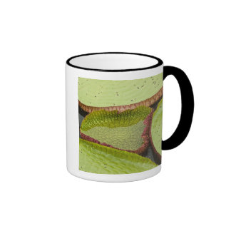 Largest lily, the Giant Amazon Water Lily Ringer Mug