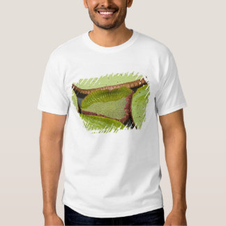 Largest lily, the Giant Amazon Water Lily Tshirt