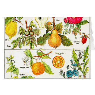 Larousse Fruit Orange Pear Grape Painting Note Card