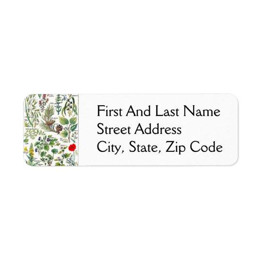 Larousse Pine Cone Tree Flower Branch Painting Return Address Label