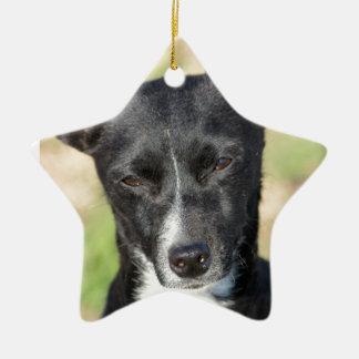 Last Hope's Squeakers Ceramic Ornament