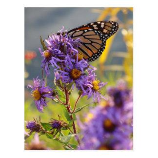 Last Monarch Butterfly Postcard