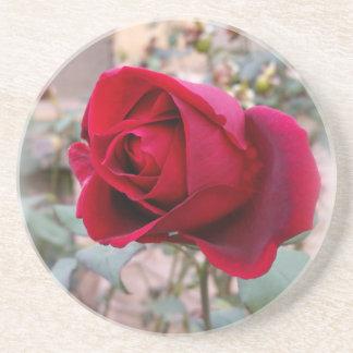 last red rose coaster