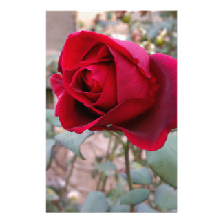 last red rose stationery