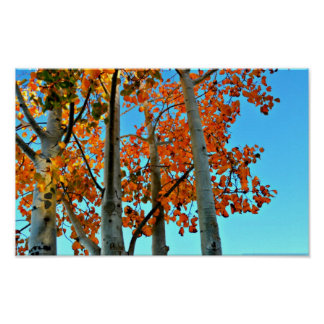 Late Autumn Afternoon Poster