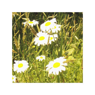 Late Summer Daisies Stretched Canvas Print