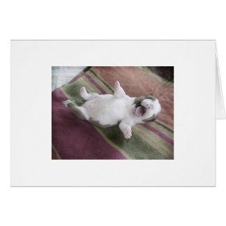 Laughing Bulldog Puppy Card