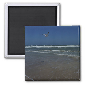 Laughing Gull Magnet