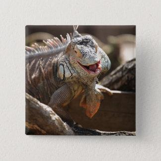 Laughing Iguana Photo 15 Cm Square Badge