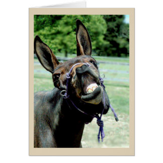 Laughing Mule Card