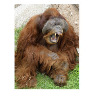 Laughing Orangutan Postcard