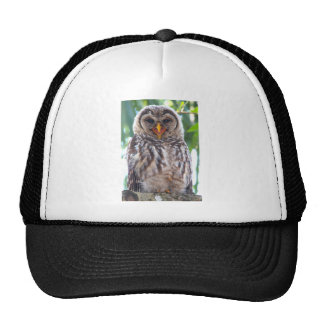 Laughing Owlet Hat
