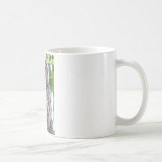 Laughing Owlet Coffee Mugs