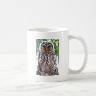 Laughing Owlet Mugs