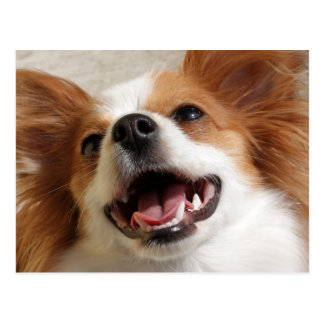 Laughing Papillon Dog Postcards
