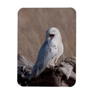 Laughing Snowy Owl Rectangular Photo Magnet