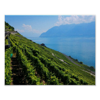 Lavaux Vineyard Terraces Poster