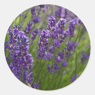 Lavendar | Lavendel Classic Round Sticker