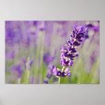 Lavendar | Lavendel Print