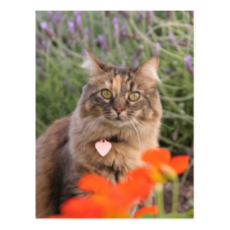 Lavendar, Nasturtium,  and a Tortoiseshell Cat Postcard