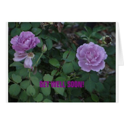 Lavendar Roses/Get Well Greeting Card