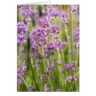 Lavendel Card
