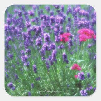 Lavender 3 square sticker
